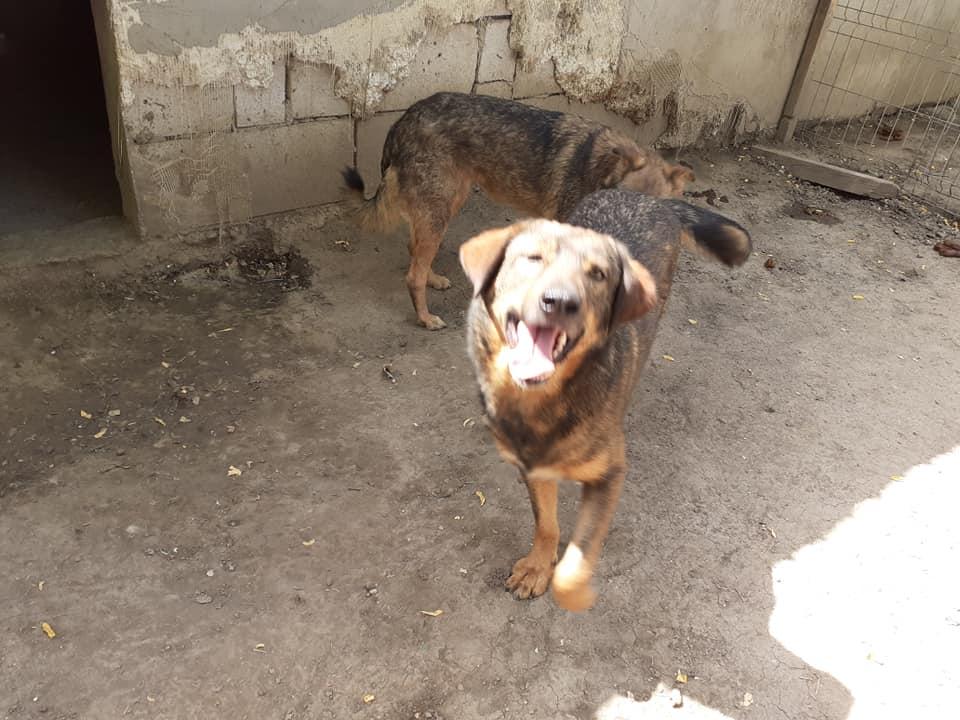 NAMI, croisé berger, soeur de Taliya et Ouzo, trouvée dans la rue en mai 2018- marrainée par Guyenne -R- - Page 2 83753011