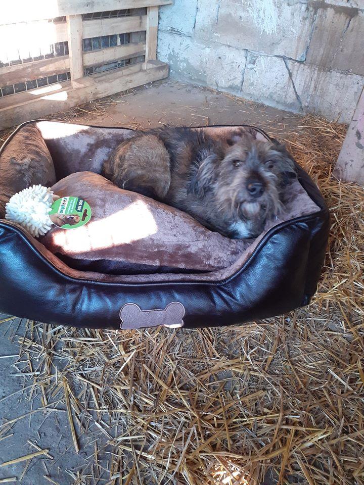 BERNY,  mâle né le 09/07/2009 - Marrainé par Rostagnat - GAGE COEUR Florence B. R-SC-SOS 84003310