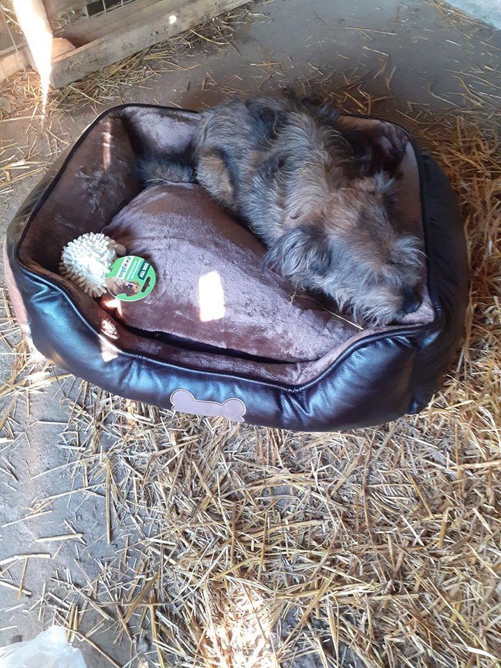 BERNY,  mâle né le 09/07/2009 - Marrainé par Rostagnat - GAGE COEUR Florence B. R-SC-SOS 84469610