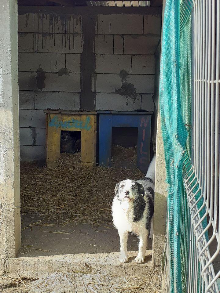 MACUMBA -type petit griffon née en 2010 - marrainée par Yemtsi - R- SOS-SC - Page 4 84702410