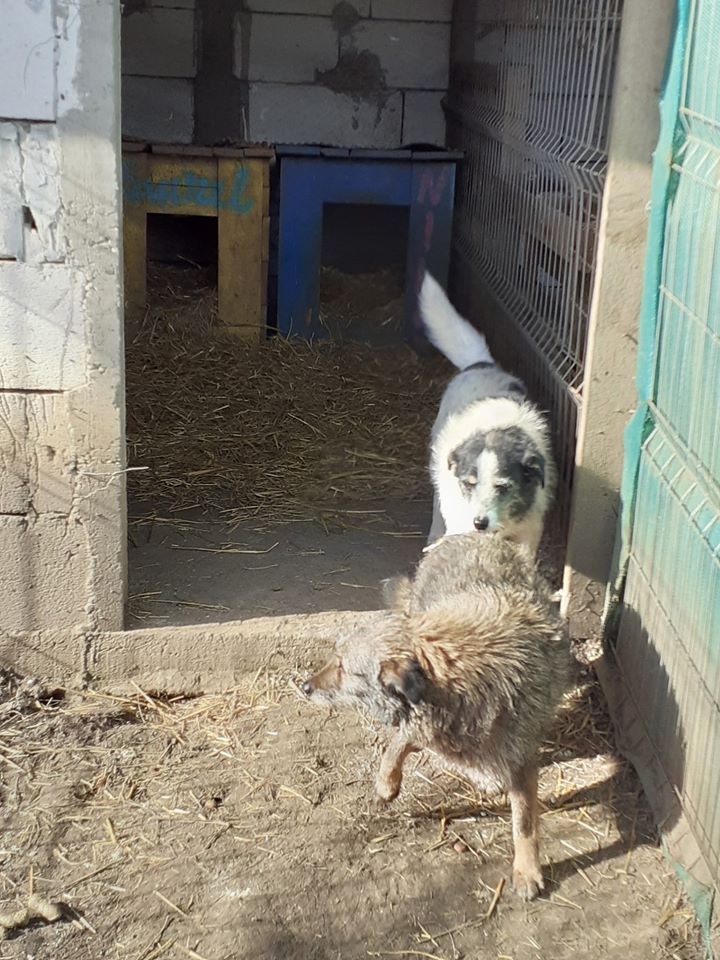 MACUMBA -type petit griffon née en 2010 - marrainée par Yemtsi - R- SOS-SC - Page 4 84711310