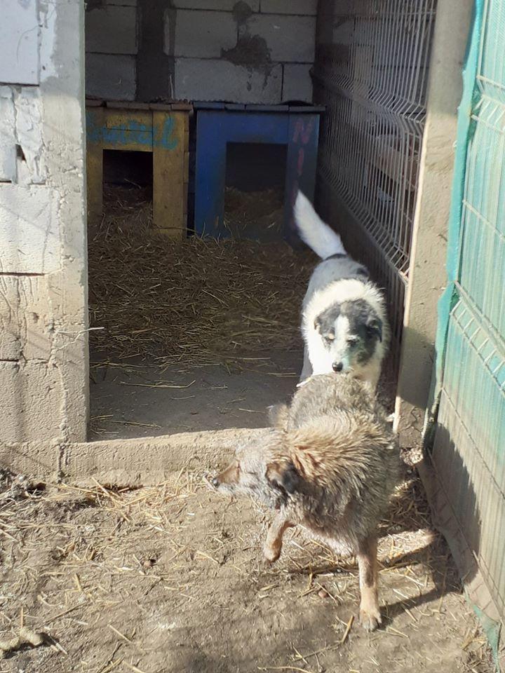 JUMPY femelle née en 2010- sauvé de l'équarrissage le 10/04/2014- parrainée par Edni94 -R-SC-SOS - Page 3 84711311
