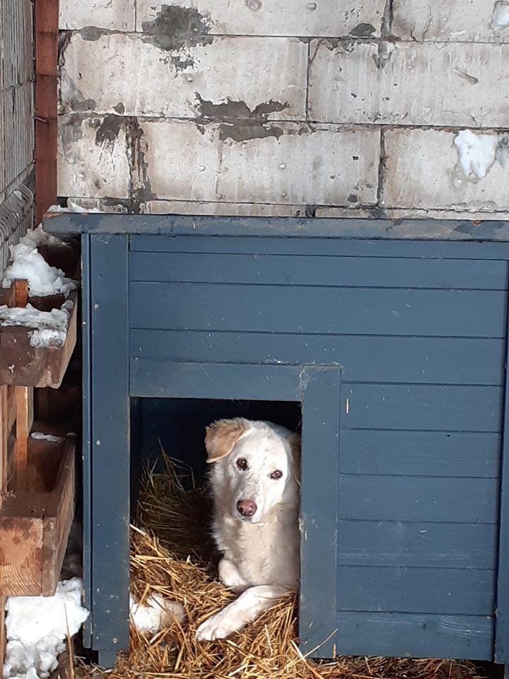 BALANUCH, mâle croisé berger sauvé de Pallady, né en 2009 parrainé par Nathalie G. -Gage Coeur  Myri_Bonnie-SC-R-SOS- - Page 3 84762210