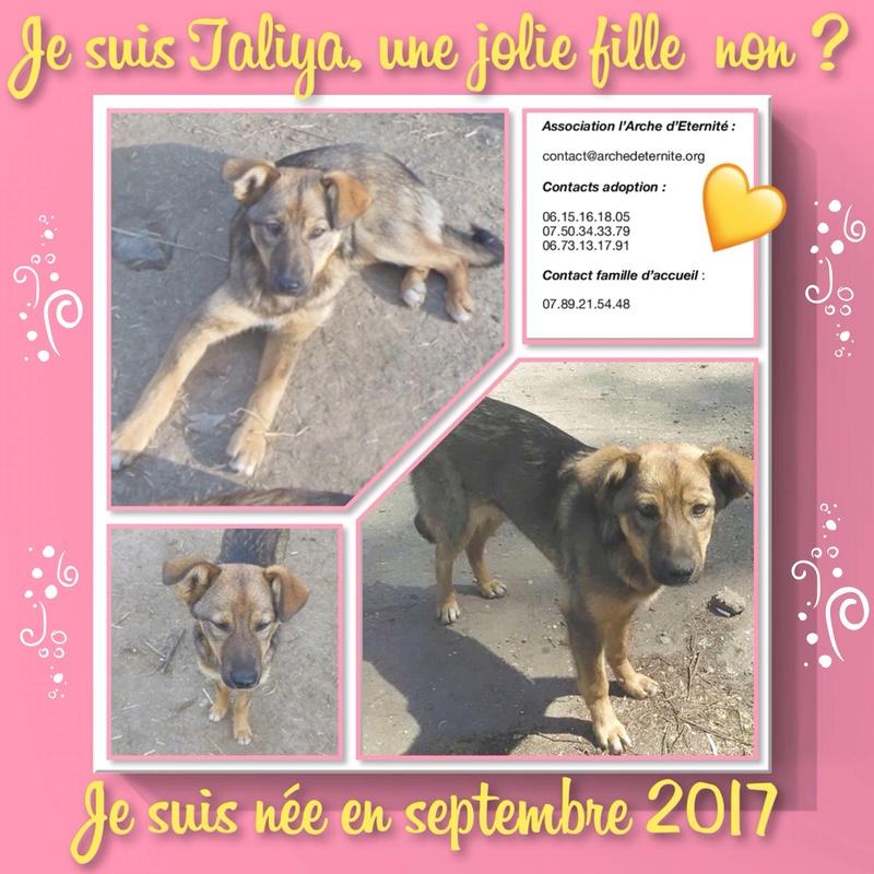 taliya - TALIYA -NEE LE 10/09/2017, soeur de Nami et Ouzo, trouvée dans le rue par Lenuta-(EN FA dept 42)- Marrainée par Karst -R-SOS-30MA 85407b12