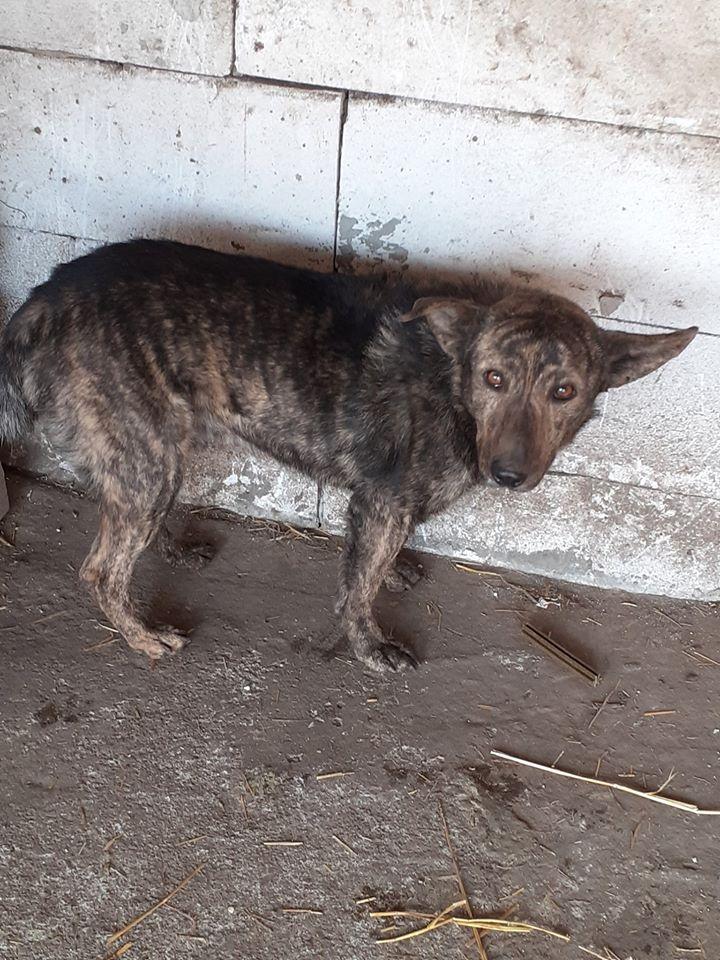 ARRY, mâle né en 2013, récupéré suite à l'avis d'expulsion du refuge de Radu- marrainé par Bouffy-R-SC-SOS 86793510