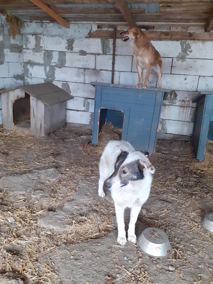 ELENA - femelle née en 2016 et ses 4 chiots sauvés de l'équarissage de BRAGADIRU - parrainée par Marguerite V. -R-SC-SOS- - Page 2 87554110