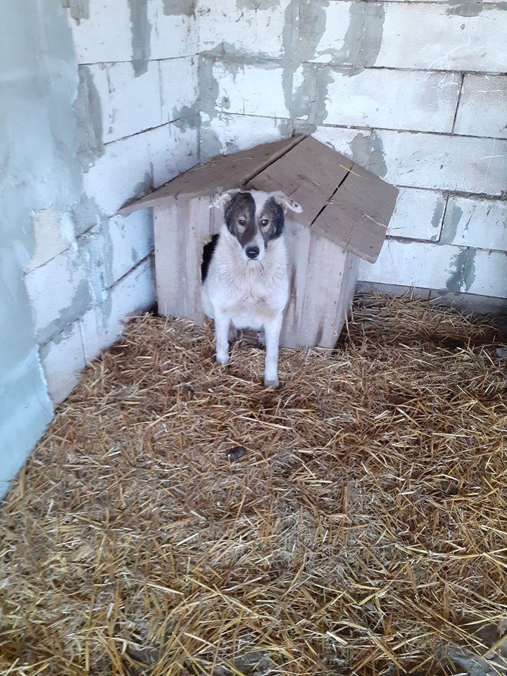 ELENA - femelle née en 2016 et ses 4 chiots sauvés de l'équarissage de BRAGADIRU - parrainée par Marguerite V. -R-SC-SOS- - Page 2 87879810