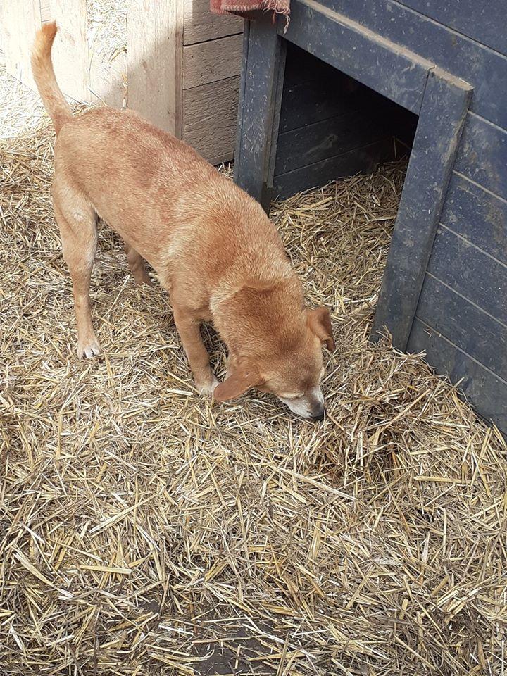 CHIROKY Petite femelle née le 13/12/2010 sauvée de l'équarrissage EN FA DANS LE 60 - parrainé par Hashleyalex-R-SOS-SC 87939810