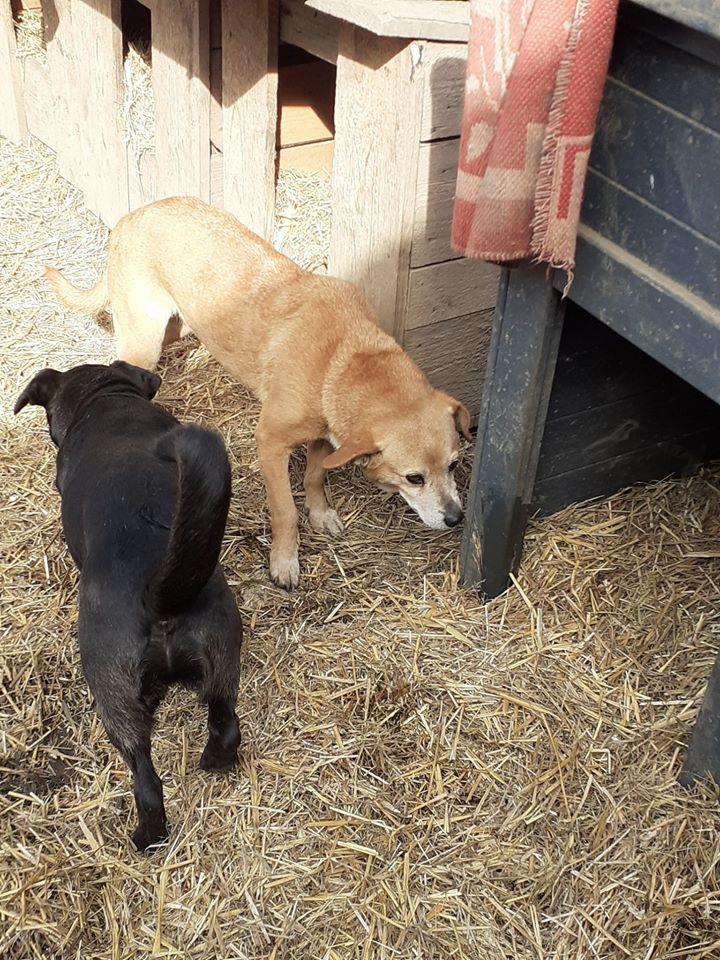 CHIROKY Petite femelle née le 13/12/2010 sauvée de l'équarrissage EN FA DANS LE 60 - parrainé par Hashleyalex-R-SOS-SC 89035210