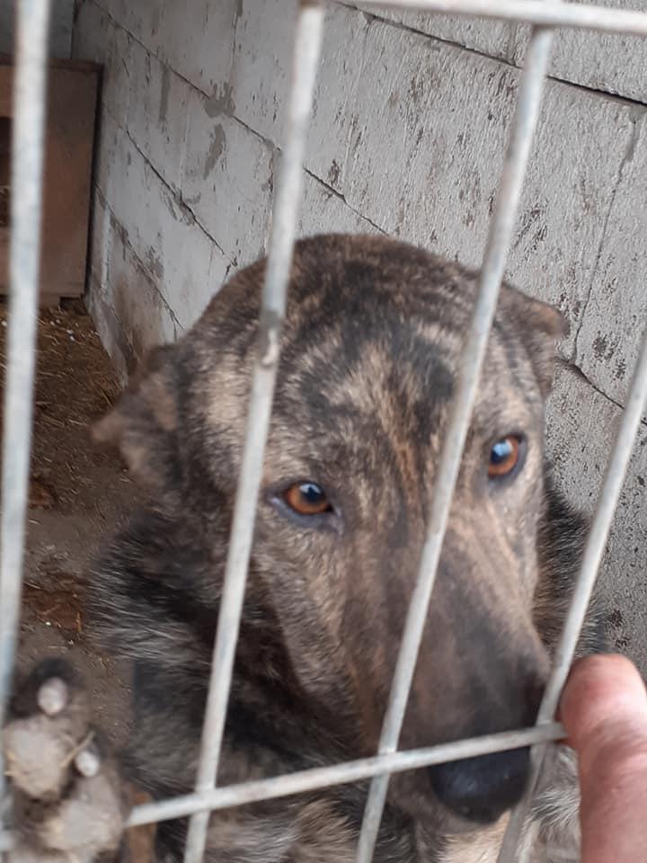 ARRY, mâle né en 2013, récupéré suite à l'avis d'expulsion du refuge de Radu- marrainé par Bouffy-R-SC-SOS 89951210