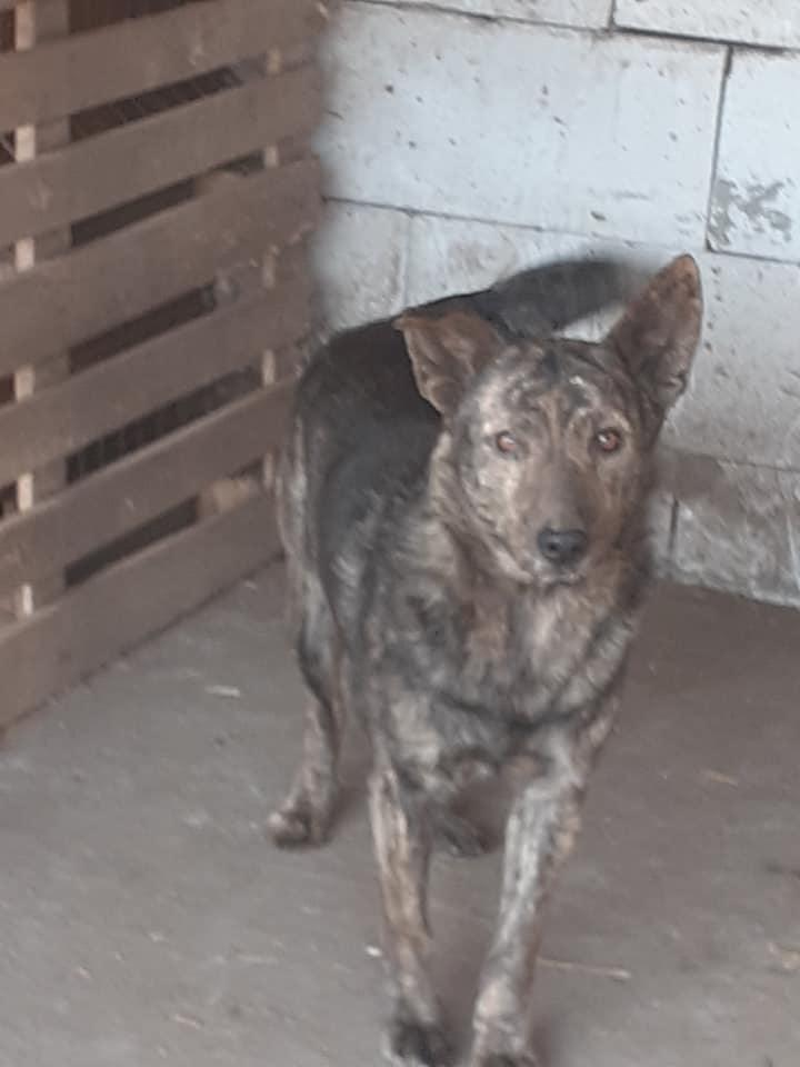 ARRY, mâle né en 2013, récupéré suite à l'avis d'expulsion du refuge de Radu- marrainé par Bouffy-R-SC-SOS 91497211