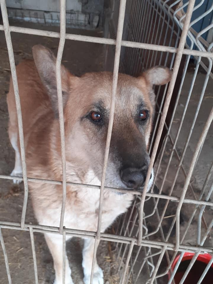 IPSY, née en 2008 sauvée de Mihailesti le 16 Avril 2018 - marrainée par Hashleyalex-R-SC-SOS 91505510