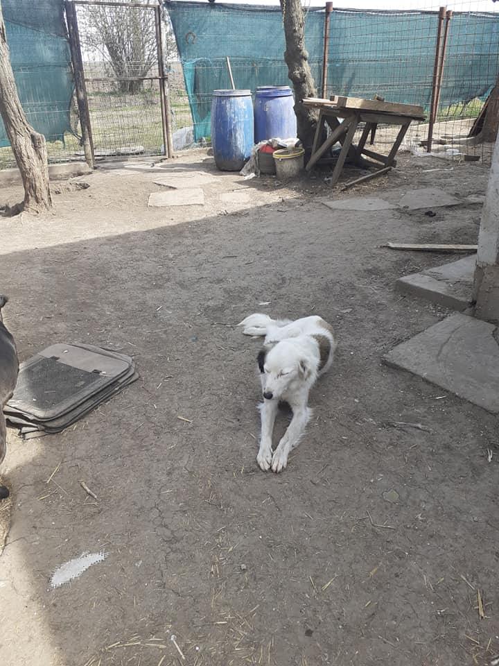 BULMA, née en mai 2017, SORTIE DE MIHAILESTI EN JUILLET 2017- marrainée par les3loulous -R-SOS-SC - Page 3 91634610