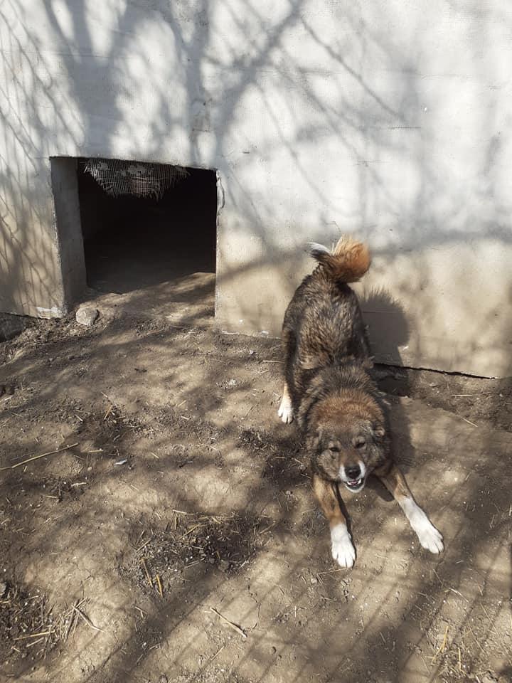 TIPPI - Très jolie femelle X berger poils mi-longs - née en 2009 - parrainée par Edni94 - R-SC- SOS - Page 3 91752310