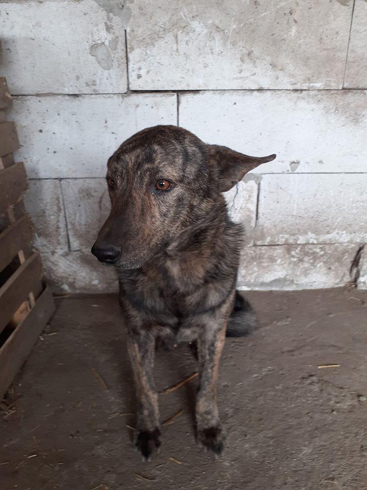 ARRY, mâle né en 2013, récupéré suite à l'avis d'expulsion du refuge de Radu- marrainé par Bouffy-R-SC-SOS 92505710