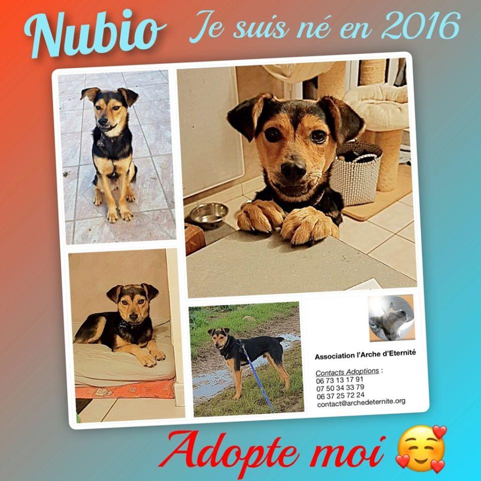 nubio - NUBIO, male né le 10/10/2016, trouvé dans un champs- marrainé par Natarya - R-SC-30MA 92941011