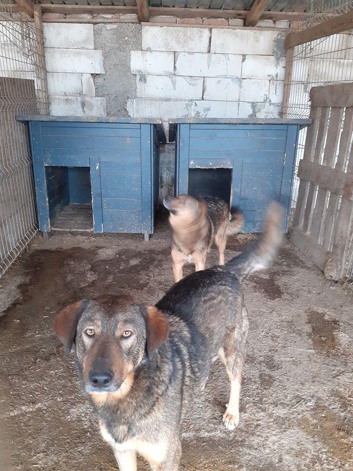 NAMI, croisé berger, soeur de Taliya et Ouzo, trouvée dans la rue en mai 2018- marrainée par Guyenne -R- 93888712