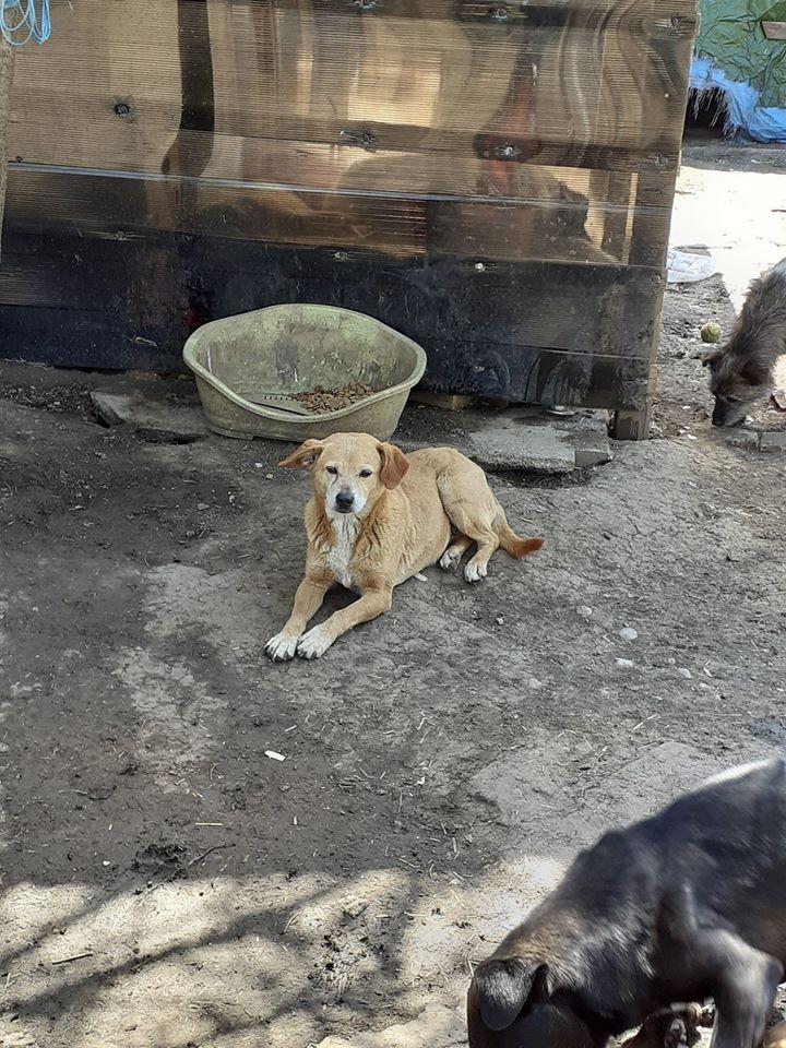 CHIROKY Petite femelle née le 13/12/2010 sauvée de l'équarrissage EN FA DANS LE 60 - parrainé par Hashleyalex-R-SOS-SC 94195410