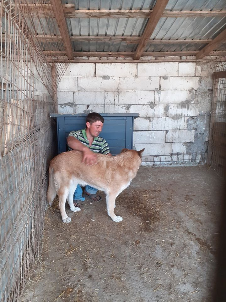 IPSY, née en 2008 sauvée de Mihailesti le 16 Avril 2018 - marrainée par Hashleyalex-R-SC-SOS 94213310