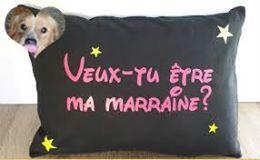 ASSIA CHAT EUROPEEN FEMELLE TRICOLORE NEE LE 10/05/2020  - EN FA DANS LE 93 95126415