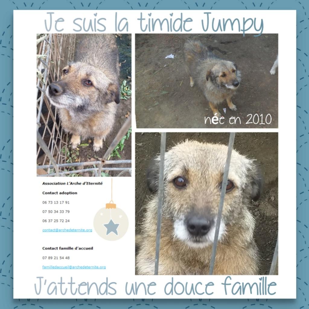 JUMPY femelle née en 2010- sauvé de l'équarrissage le 10/04/2014- parrainée par Edni94 -R-SC-SOS 95267012