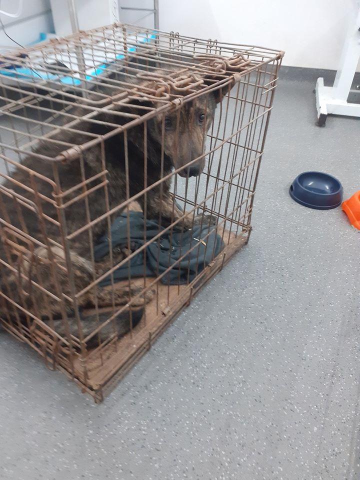 ARRY, mâle né en 2013, récupéré suite à l'avis d'expulsion du refuge de Radu- marrainé par Bouffy-R-SC-SOS 95627611