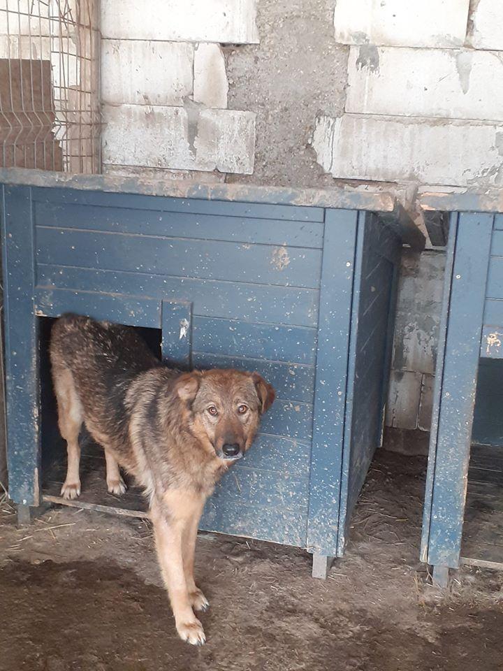 OUZO, né en sept 2017,  croisé berger, frère de Taliya et Nami, trouvé dans la rue en mai 2018 - Parrainé par Viviane -R- - Page 2 95791711