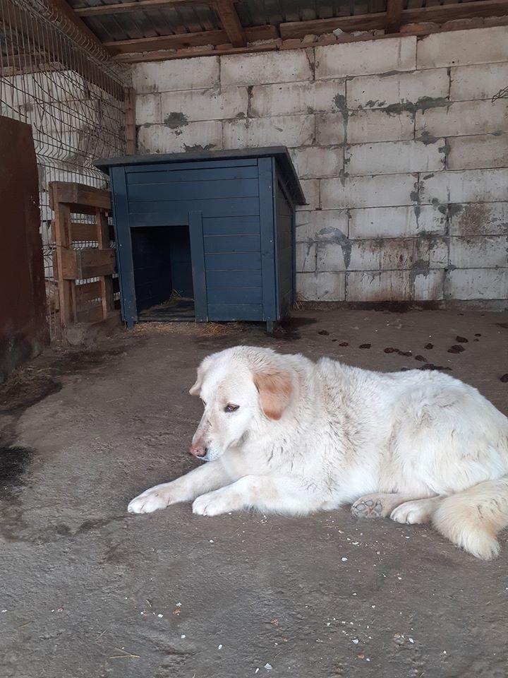 BALANUCH, mâle croisé berger sauvé de Pallady, né en 2009 parrainé par Nathalie G. -Gage Coeur  Myri_Bonnie-SC-R-SOS- - Page 3 95845012