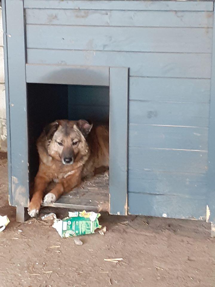 RELKO, croisé berger, né en 2014,sorti de l'équarrissage fin Avril 2017- marrainé par Maousse54 et Yemtsi -R-SC - Page 3 96672710