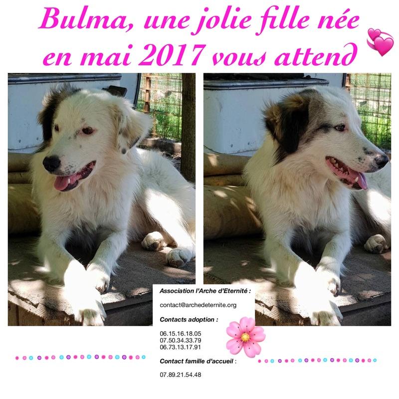 BULMA, née en mai 2017, SORTIE DE MIHAILESTI EN JUILLET 2017- marrainée par les3loulous -R-SOS-SC A2181210