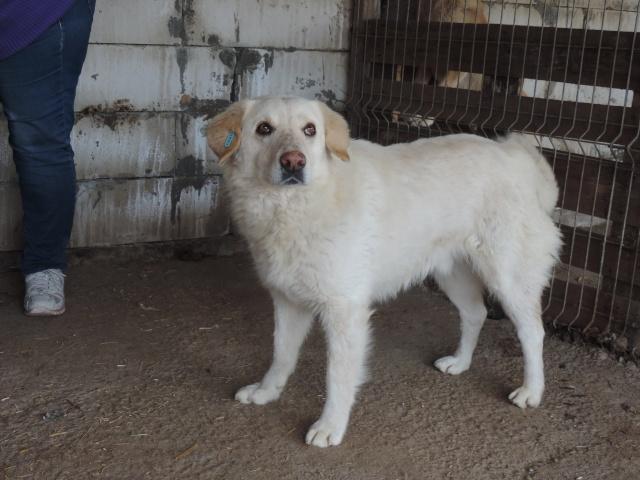 BALANUCH, mâle croisé berger sauvé de Pallady, né en 2009 parrainé par Nathalie Gamblin-Gage Coeur  Myri_Bonnie-SC-R-SOS- - Page 2 Balanu13