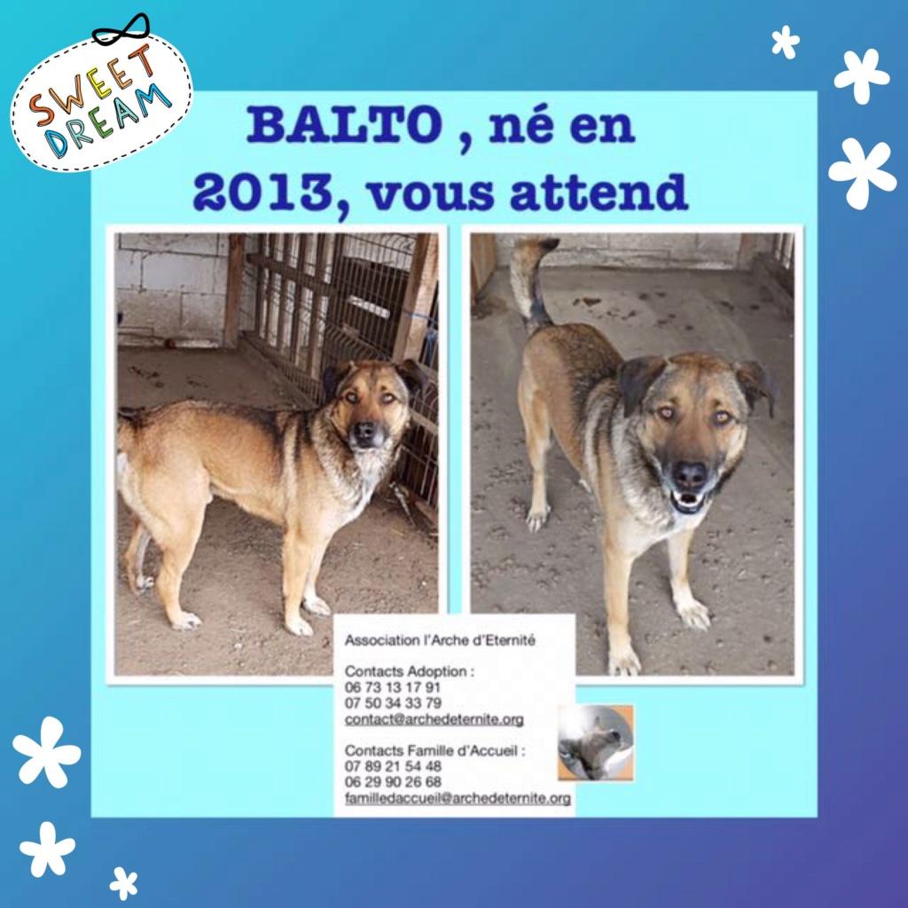 BALTO, mâle sorti de l'équarrissage né en 2013-R- marrainé par Nathalie G-R Balto11
