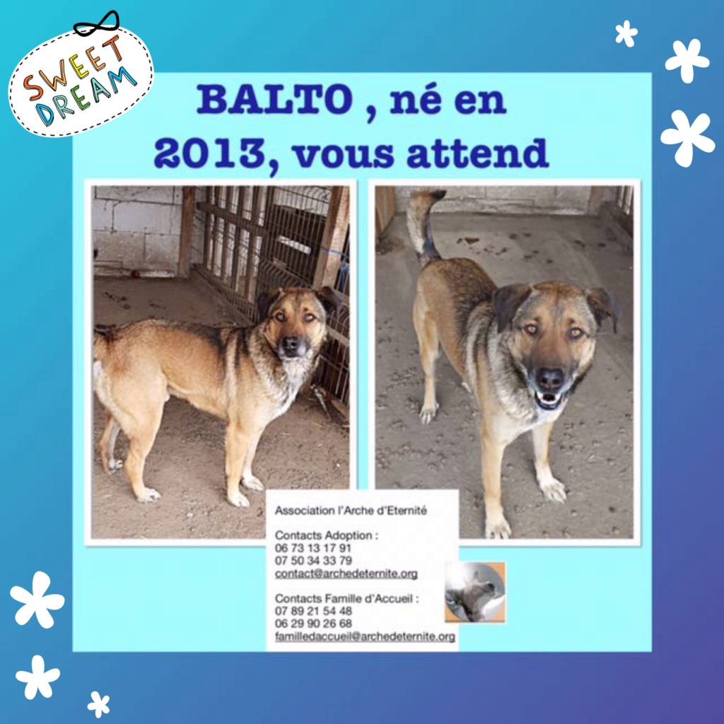 BALTO, mâle sorti de l'équarrissage né en 2013-R- marrainé par Nathalie G-R Balto111