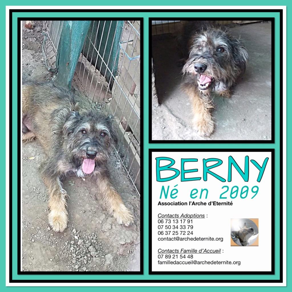BERNY,  mâle né le 09/07/2009 - Marrainé par Rostagnat - GAGE COEUR Florence B. R-SC-SOS Berny_12