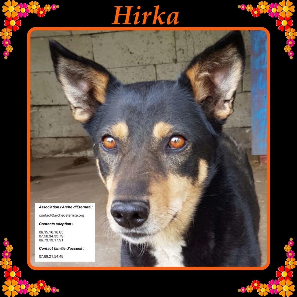 HIRKA race commune, née en 2009 - sortie de l'équarrissage en déc 2013 - Parrainée par Fabienne P. -R-SC-SOS  - Page 3 Bfd25010