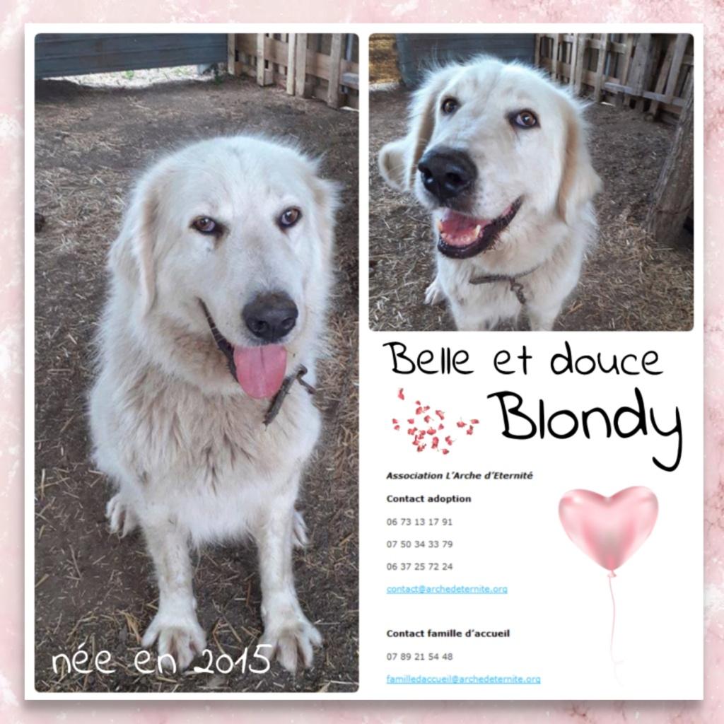 blondy - BLONDY-  femelle née en 2015 - Croisée Montagne des Pyrénées blanc - Marrainée par Réglisse-R- Blondy12