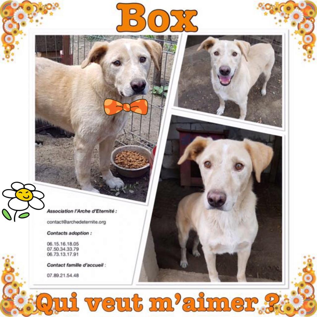 BOX (trois) , croisé labrador, né en 2007 -  Parrainée par Samie + Gage-coeur : (1) Samie -R-F-SOS-SC- Box10