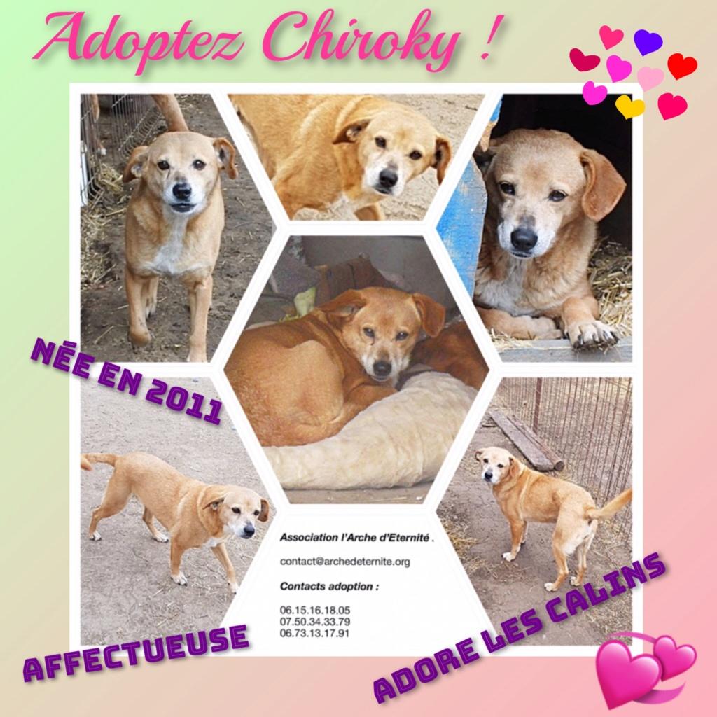 CHIROKY Petite femelle née le 13/12/2010 sauvée de l'équarrissage EN FA DANS LE 60 - parrainé par Hashleyalex-R-SOS-SC Chirok13