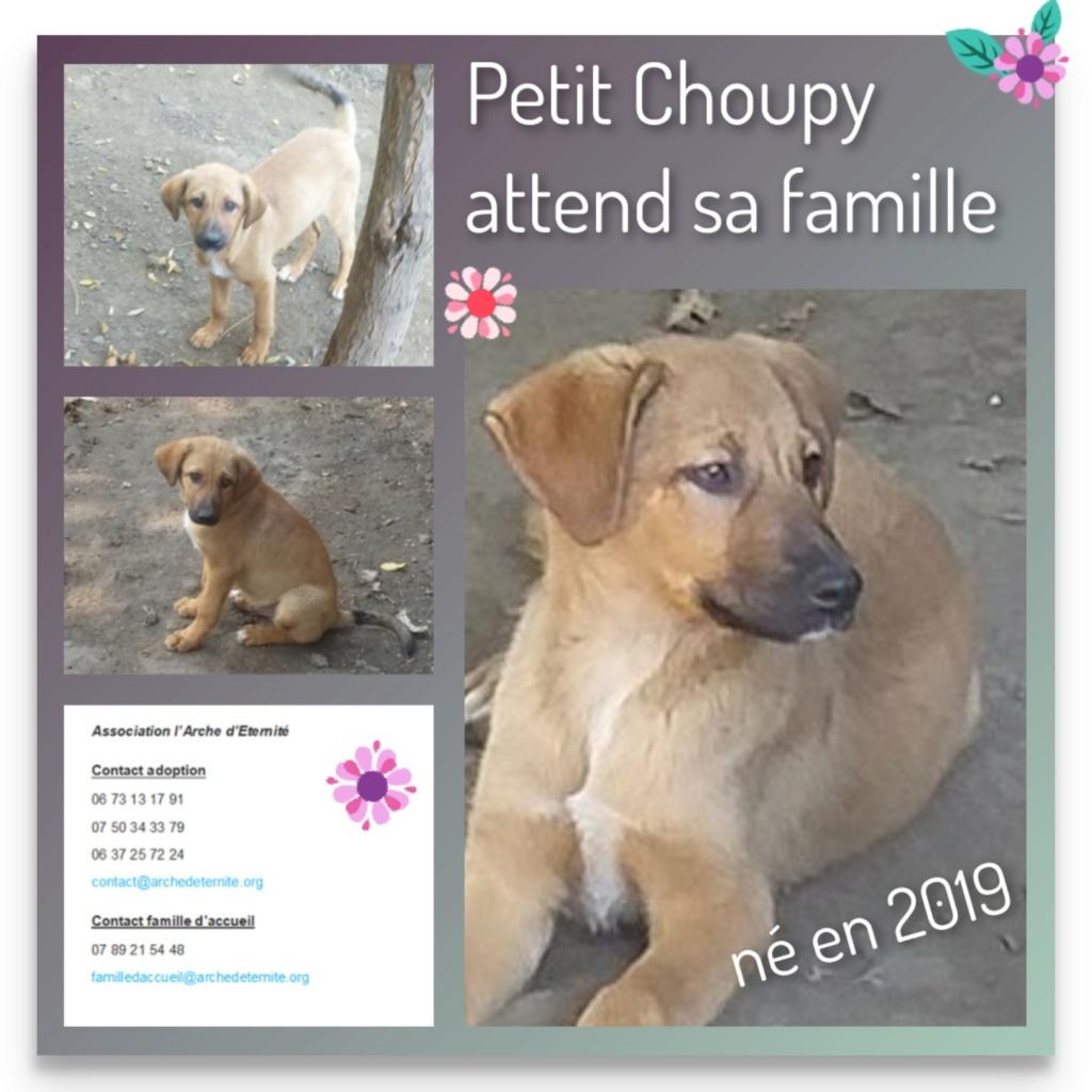 choupy - CHOUPY mâle né en Juin 2019 portée de 5 trouvés par Lénuta en septembre 2019- marrainé par Réglisse -R- Choupy10