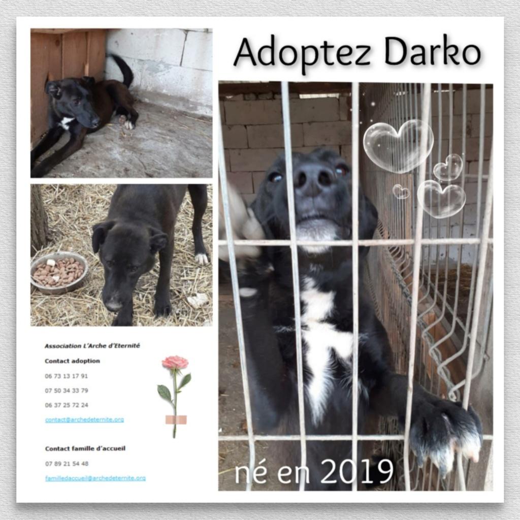 darko - DARKO NÉ EN 2019 -  SAUVETAGE DES 14 DE L'EQUARRISSAGE- marrainé par Vhak  -SC-SOS-R Darko111
