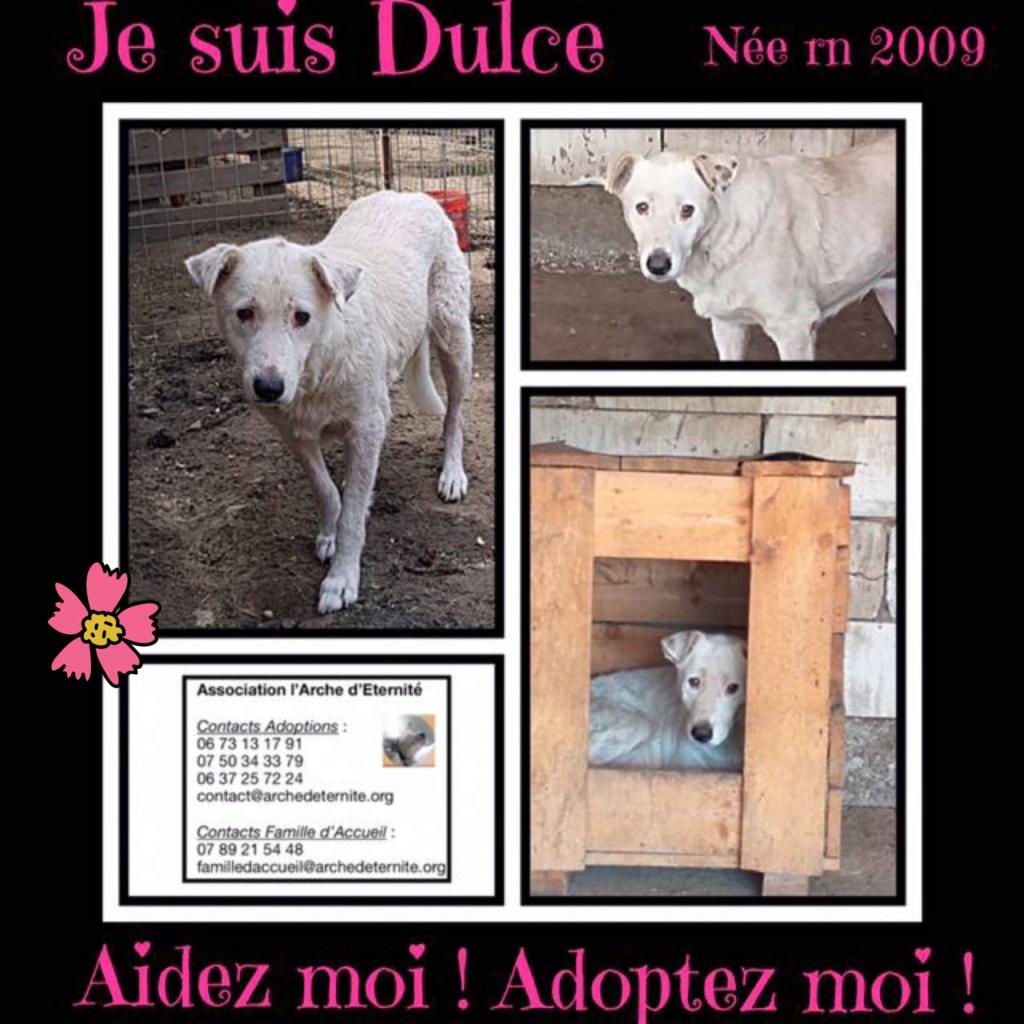 DULCE - Magnifique femelle Blanche - née en 2009 - Parrainée par Samie -SOS-FB-R-SC-  - Page 3 Dulce10