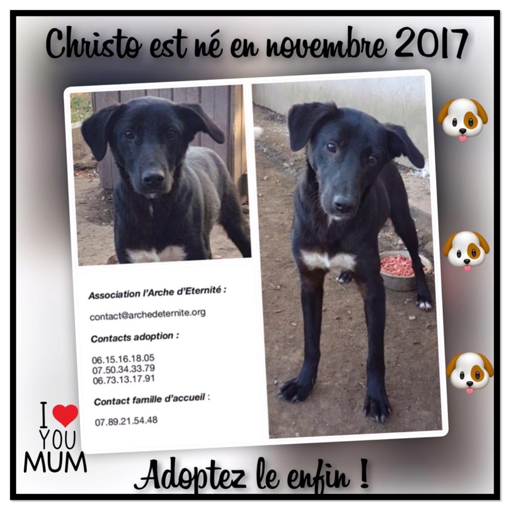 Christo - CHRISTO, mâle, noir poitrail blanc, né en NOV 2017, portée de Naola trouvé enfermé dans un sac- Marrainé par Magda D. -R-SC E9320110