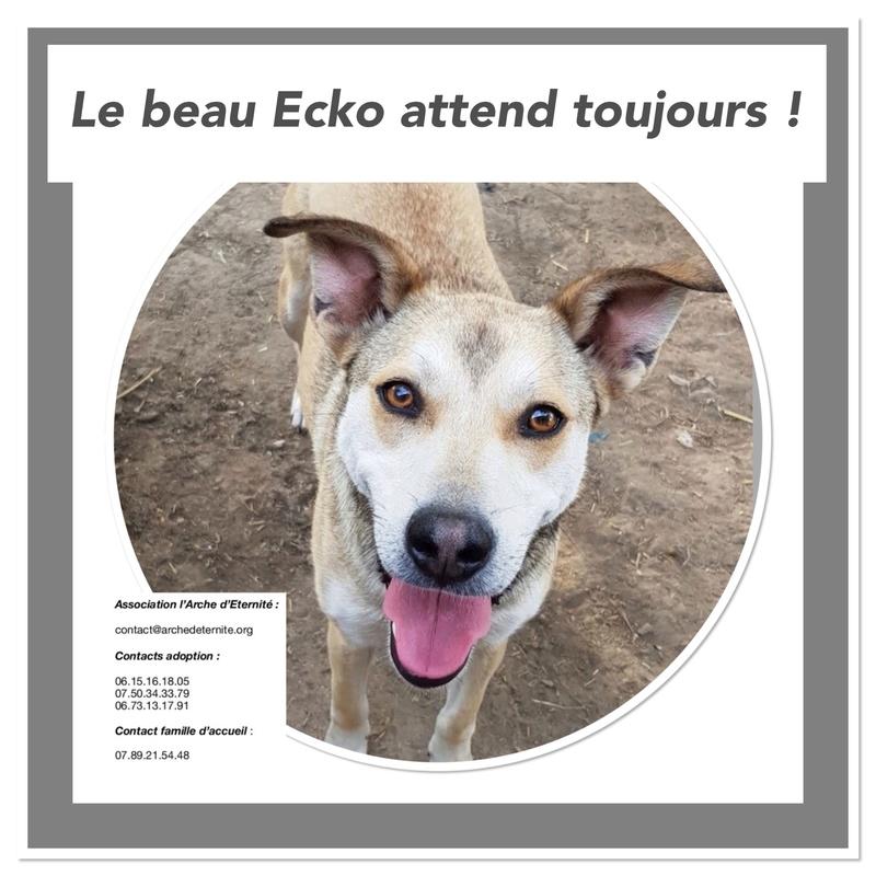 ECKO, mâle, né en Février 2016, équarrissage de PALLADY - parrainé par Nelly69-SOS-SC-R- - Page 3 Ecko_211