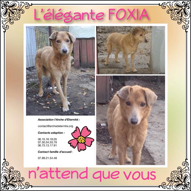 FOXYA , X BERGER , née en 2015 - Marrainée par Florence H. et Rita B.-R-SC Foxia11