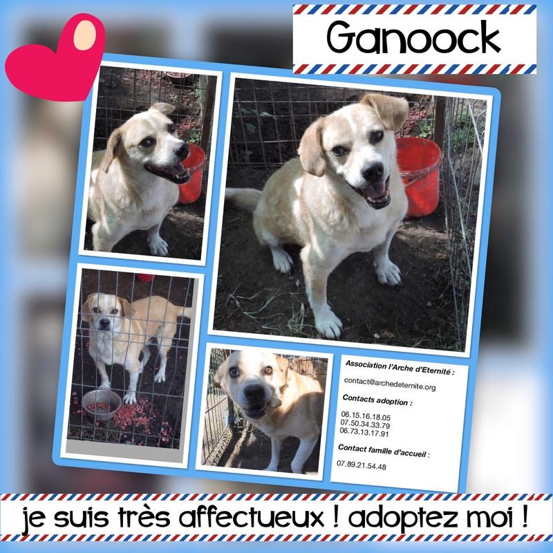 ganoock - GANOOCK - mâle né le 30/10/2008 en FA dans le 94 - parrainé par Connecticut + Gage-coeur : Connecticut - R-SC-SOS-AS-30MA Ganooc10
