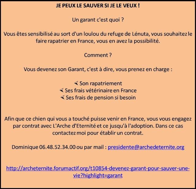 BONI  frère de Carina, NE EN AOUT 2008 - PARRAINE PAR REGLISSE -  R - LBC-SC-SOS - Page 3 Garant14