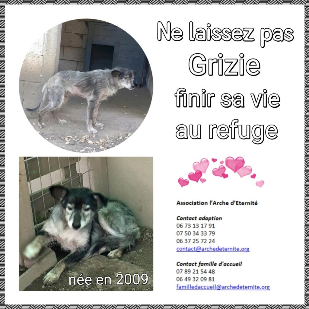 grizie - GRIZIE - Taille moyenne - Femelle née le 10/08/2009 EN FA DANS LE 28 - Marrainée par Sabfly -R-SC- SOS Grizie10