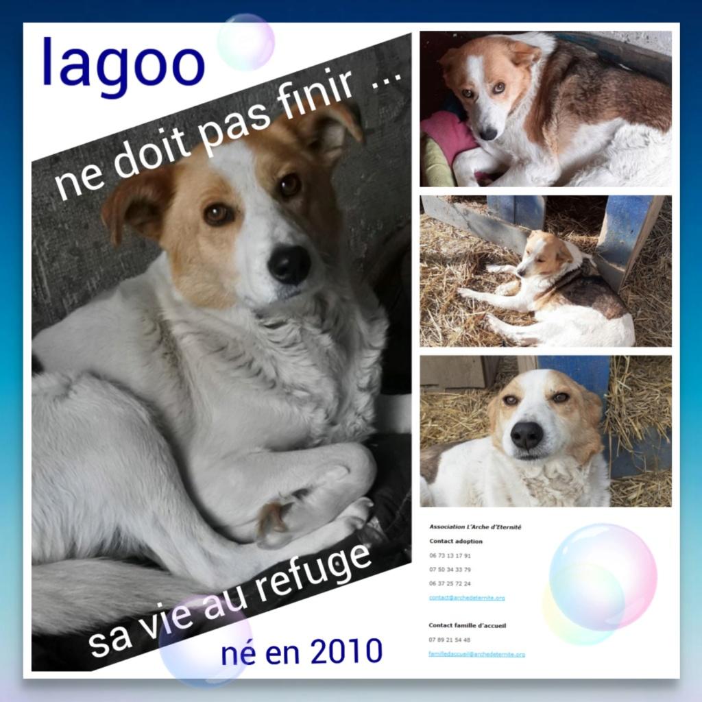 IAGOO FILS DE GEORGICA ET D'ANOUSHKA, né le 20 Aout 2010, parrainé par Babsu -SC-LBC- R- SOS -  Iagoo110