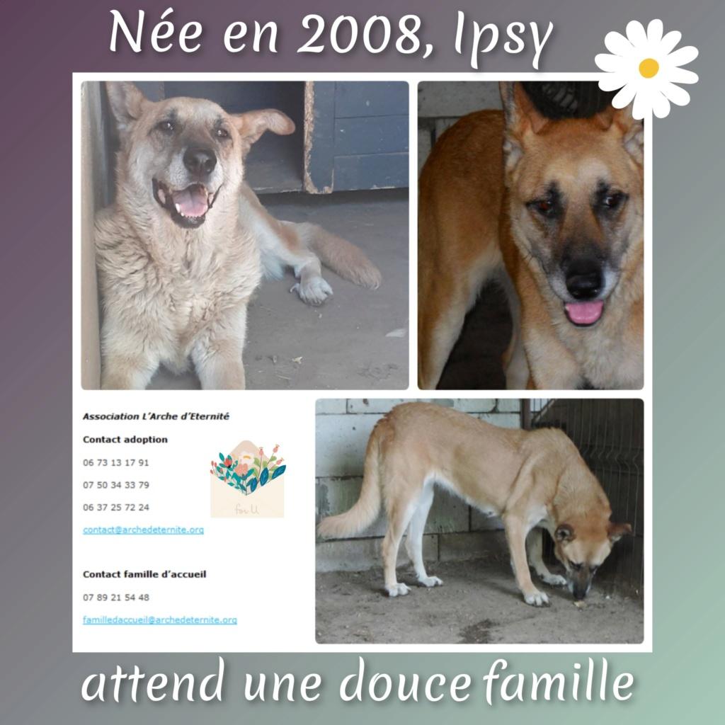 IPSY, née en 2008 sauvée de Mihailesti le 16 Avril 2018 - marrainée par Hashleyalex-R-SC-SOS Ipsy1010
