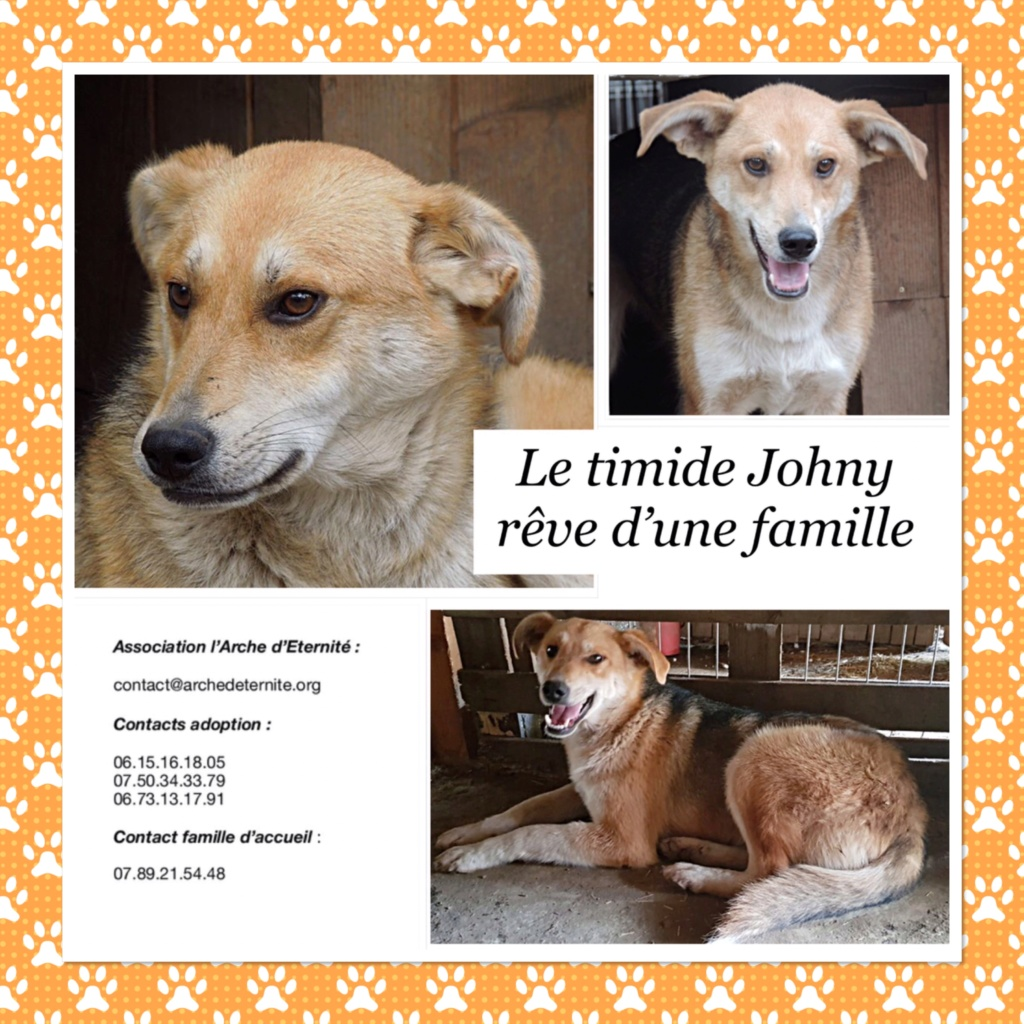 JOHNY, bébé d'Elia, mâle né en Octobre 2016 - parrainé par Carlita -SOS-R-SC - Page 2 Johny10